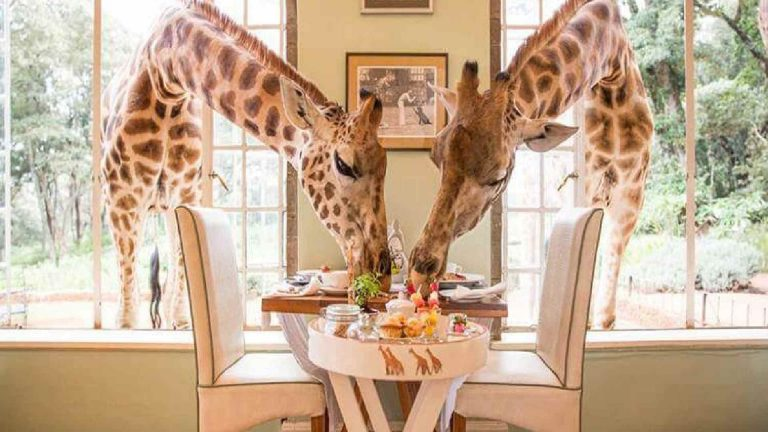 Read more about the article A Guide Through Giraffe Castle in Kenya